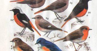 Картинки птицы Сибири с названиями (9 фото)