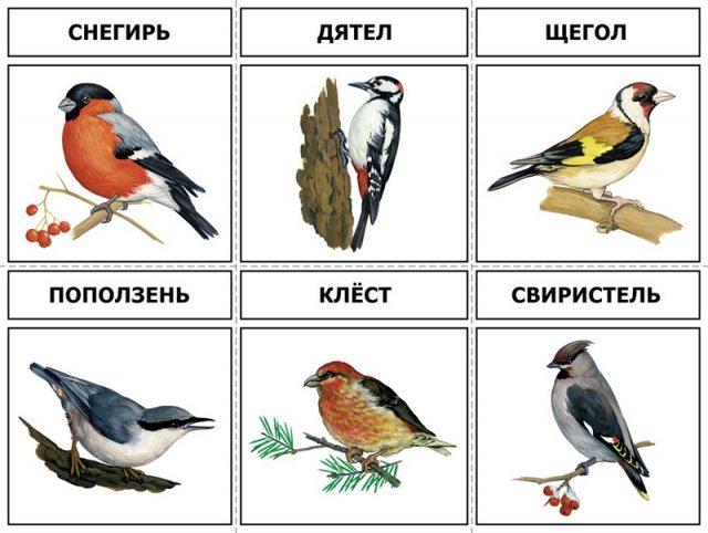 Перелетные птицы: названия для детей, описание, список. Фото 74