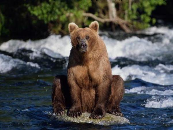 Фото белая медведица с медвежонком