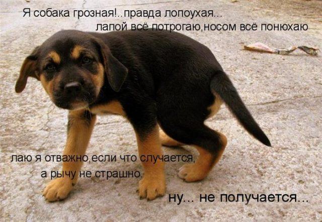 Бесплатно фото собак