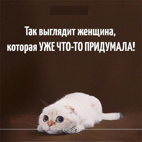 Смешные картинки с надписями про людей и животных
