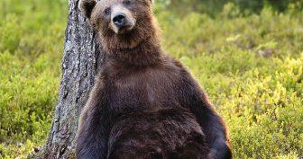 Смешные картинки с медведями (35 фото)
