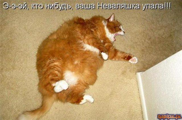 Смешные картинки про кошек с надписями (35 фото ... Собака и Кошка