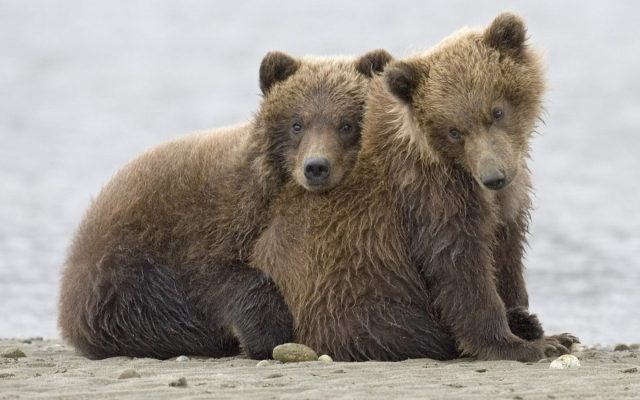Картинки с смешными надписями маша и медведя