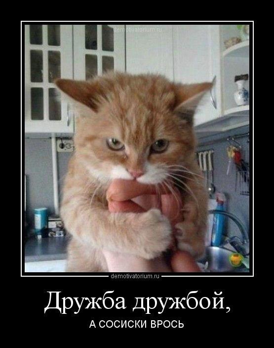 Выставкапродажа котят
