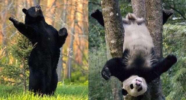 Животные тайги Фото  Животные северных лесов