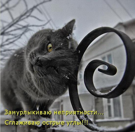 Фото кошек и котят скачать