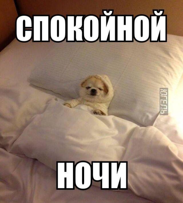 спокойной ночи приколы фото