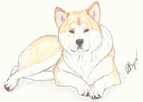 Картинки нарисованные карандашом животные красивые 9