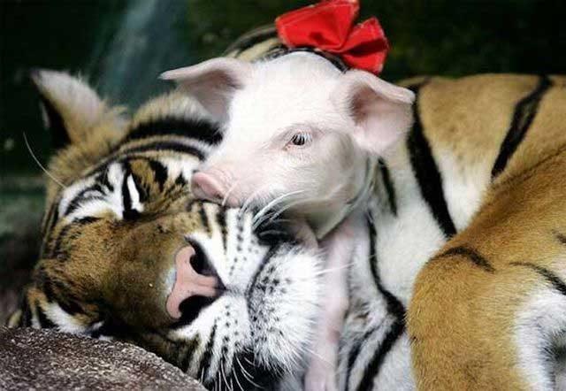 Скачать картинки с надписями прикольные про животных