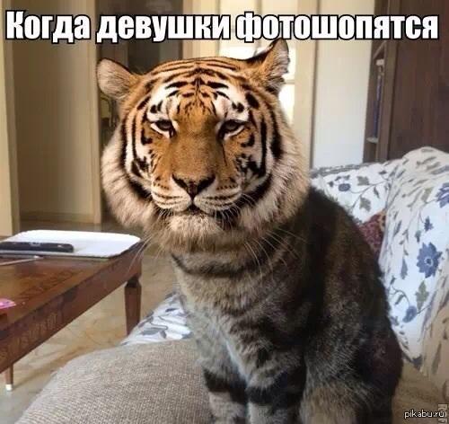 Новые прикольные фото животных с надписями (41 фото ... Собака и Кошка