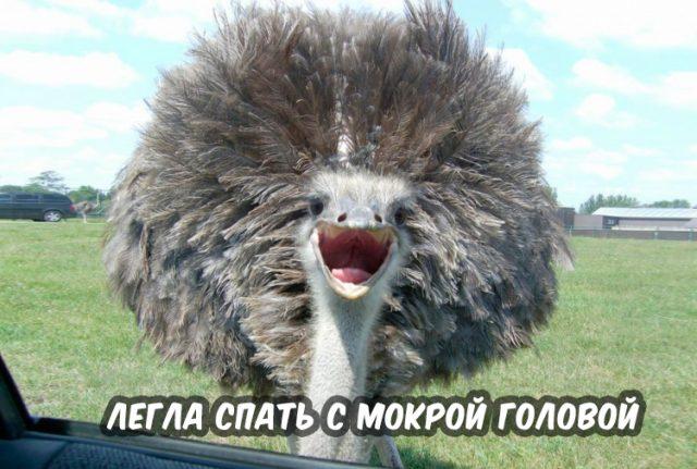 Хранители снов  КиноПоиск