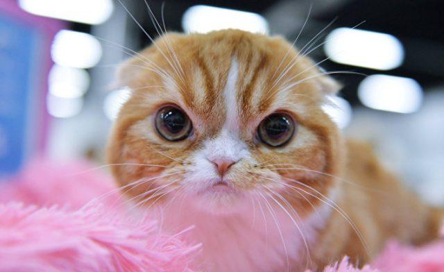 Картинки новые котята