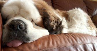 Прикольные фото спящих (35 фото)