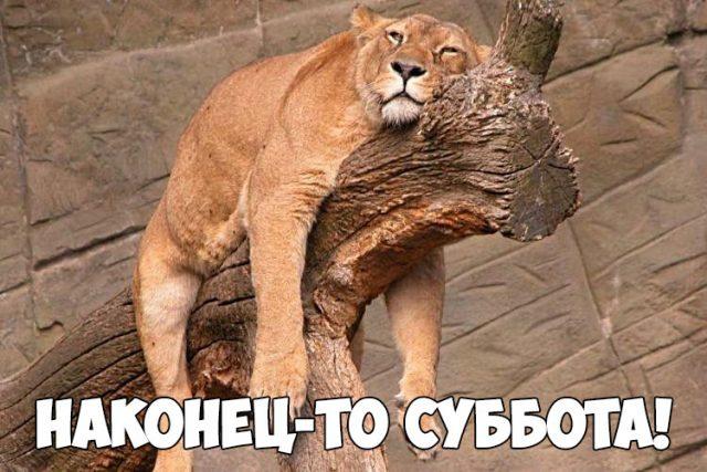 http://bipbap.ru/wp-content/uploads/2018/03/Kartinki-pro-subbotu-prikolnye-i-smeshnye-smotret-podborku-19-7-1-640x427.jpg