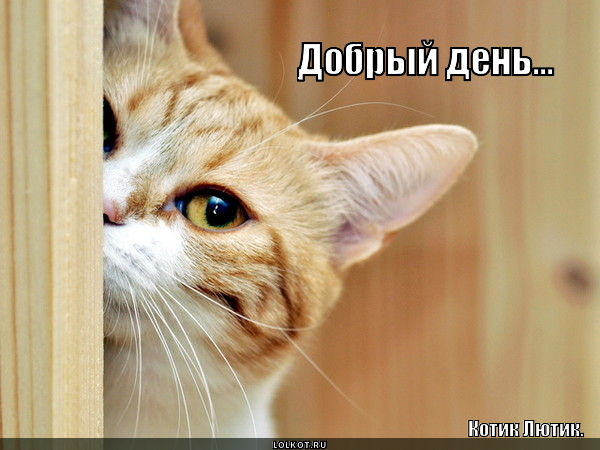 bipbap.ru