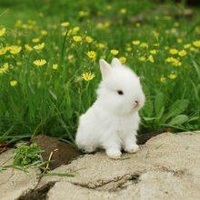 Красивые картинки кролики (35 фото)