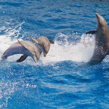 Красивые картинки дельфины (30 фото)