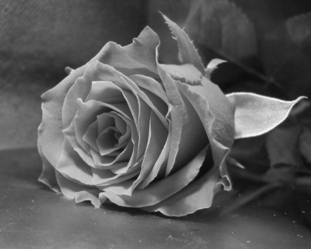 Черно белая красивая картинка