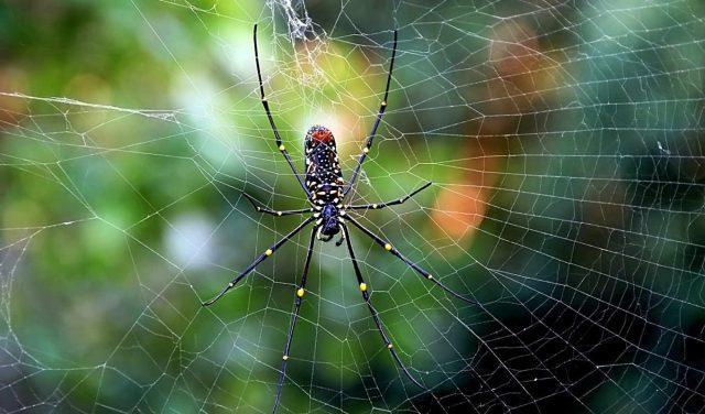 Скачать обои на рабочий стол бесплатно с человеком пауком