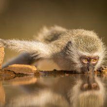 Красивые картинки дикой природы (35 фото)