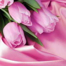 Красивые картинки тюльпанов на рабочий стол (38 фото)