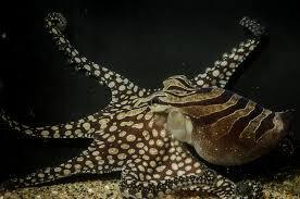 Красивые картинки осьминогов (25 фото)