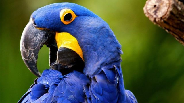 Красивые картинки попугаев (33 фото)