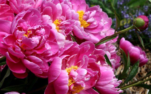 Картинки роз на рабочий стол красивые большие на весь экран бесплатно