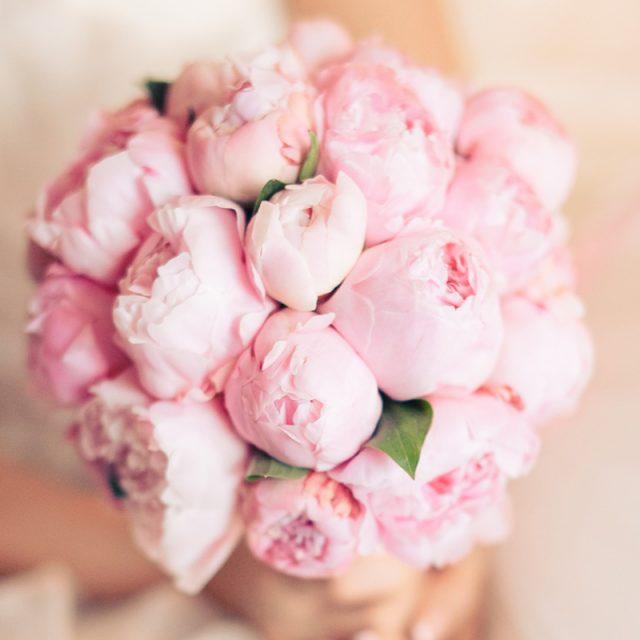 Красивые картинки цветы 39 фото  Прикольные картинки и юмор