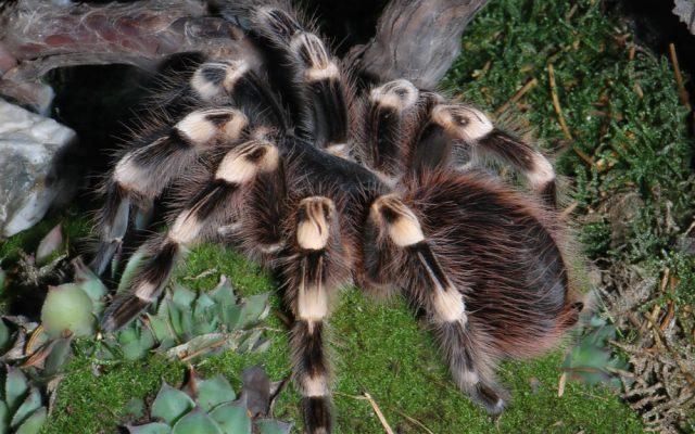 Красивые картинки пауков на рабочий стол (30 фото)