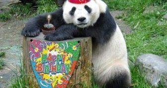 Смешные картинки поздравления С Днем Рождения Майя (27 фото)