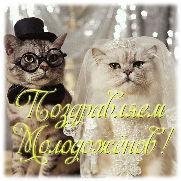 Прикольные свадебные поздравления в картинках (21 фото)