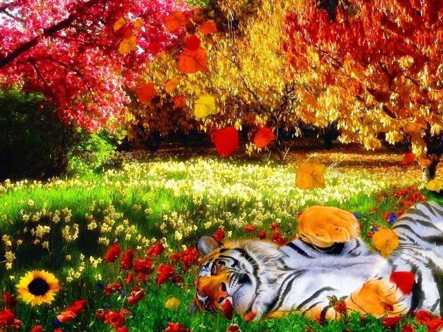 Картинки осень в парке  Фото мир природы