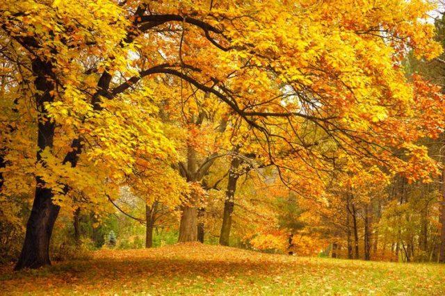 Листья на воде фото