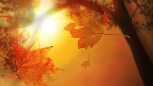 Фото осенние листья на рабочий стол
