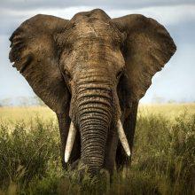Картинки Африка (31 фото)