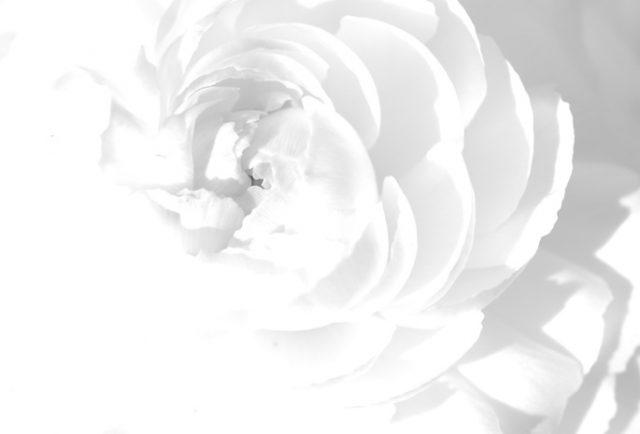 Белый фон для фото (19 фото)