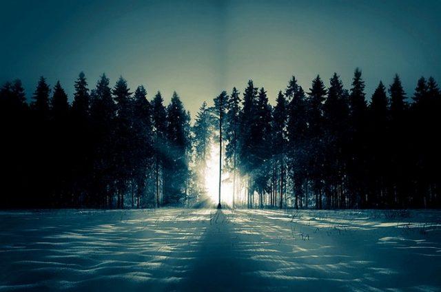 Дорога в лесу картинки