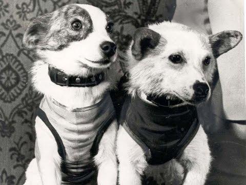 Фото собак Белка и Стрелка (11 фото)